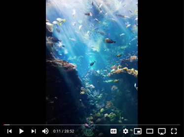 Screen Shot 2021-05-04 at 7.05.34 PM.png