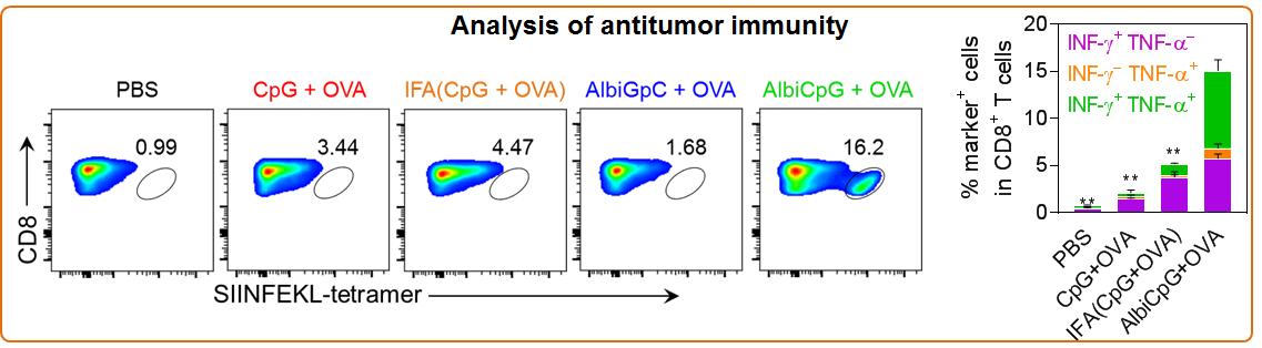 Analysis of antitumor immunity
