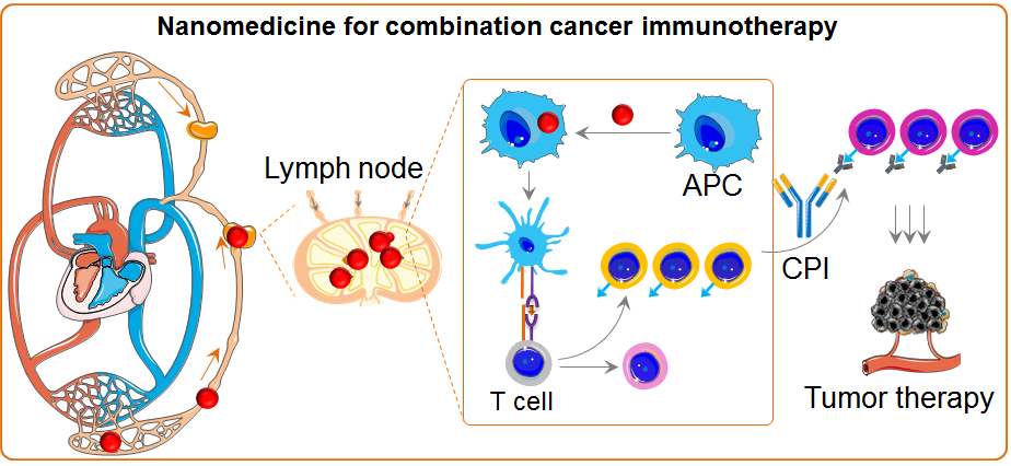 Nanomedicine for combination cancer immunotherapy