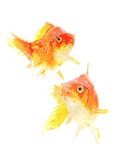 פוסטר דגי זהב