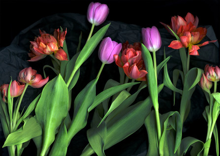 Tulips 2002