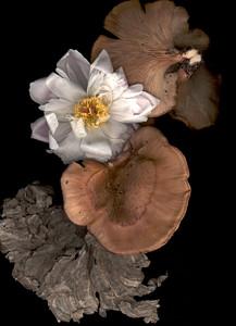 Mushroom, Peony & Wasp Nest 2002