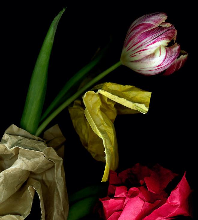 Tulip 2002