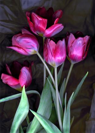 Tulips III 2002
