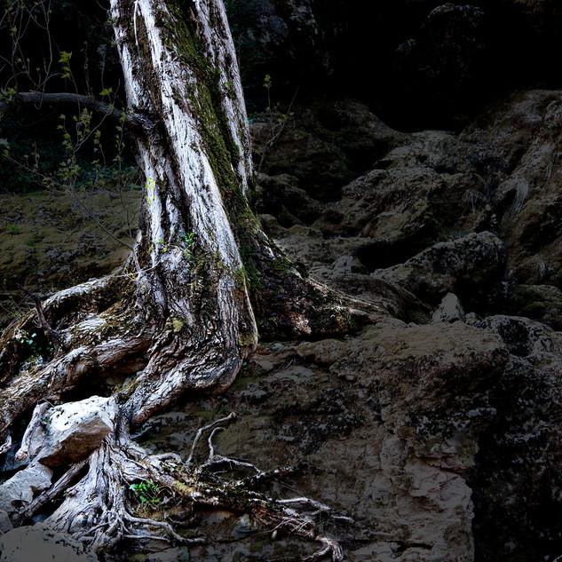 Issue_de_secours_arbre_meditation_©Sand