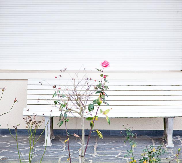rose blanc blLA_MG_3262 BD.jpg