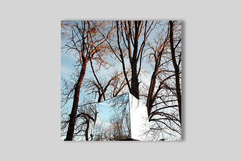 18-08-BACK-HOME-arbres-nus-ventes.jpg