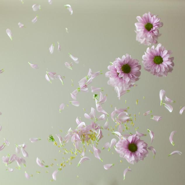 2018_Chrysantheme--miroir_Sandra-Matamor