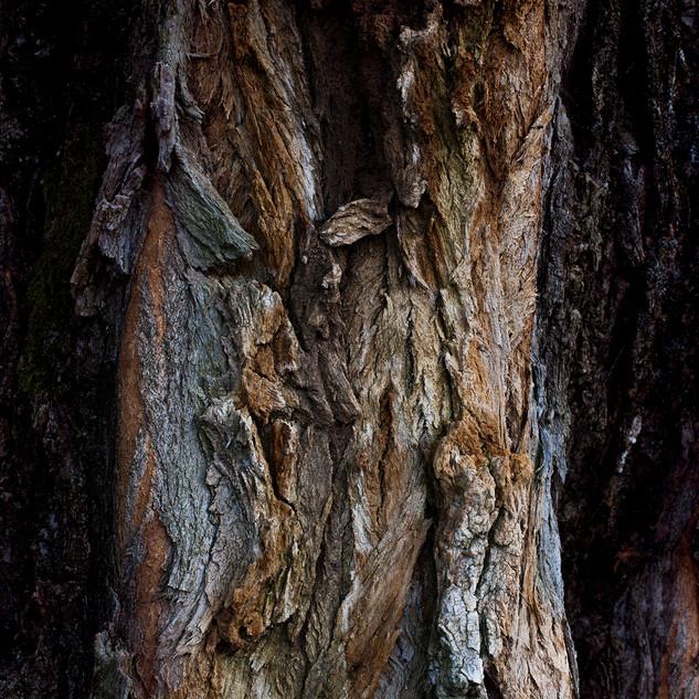88-Issue_de_secours_tronc_d'arbre_©Sand