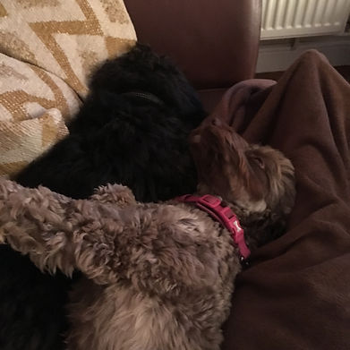 Doggy best buddies