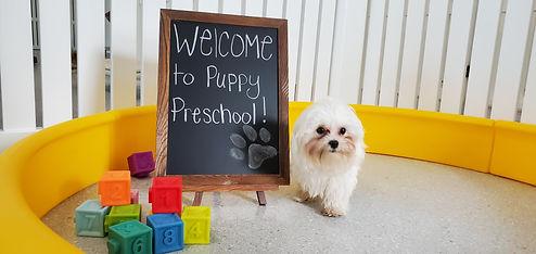 Puppy preschool at Bay Paws
