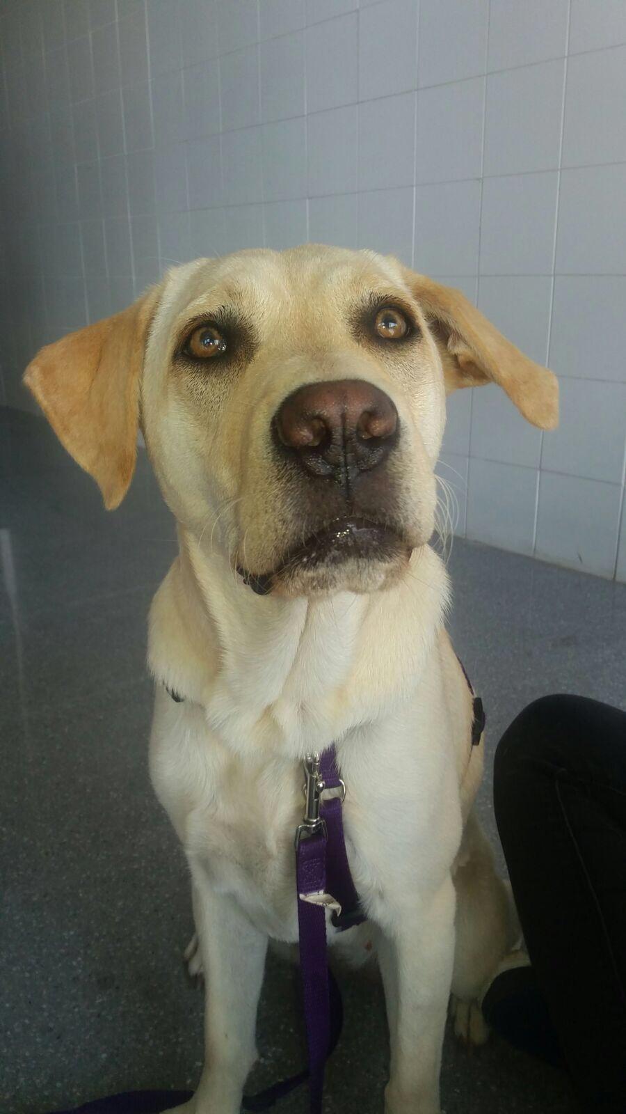terapia con perro residencia