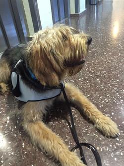 educación asistida con perro