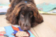 taller de letura con perro
