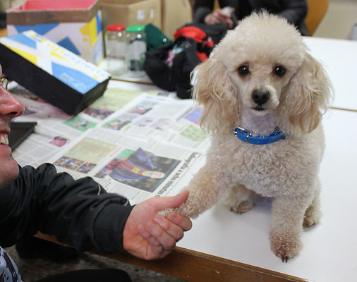 taller actividad asistida con perro