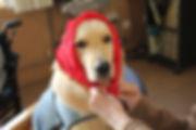 blog material perro de terapia