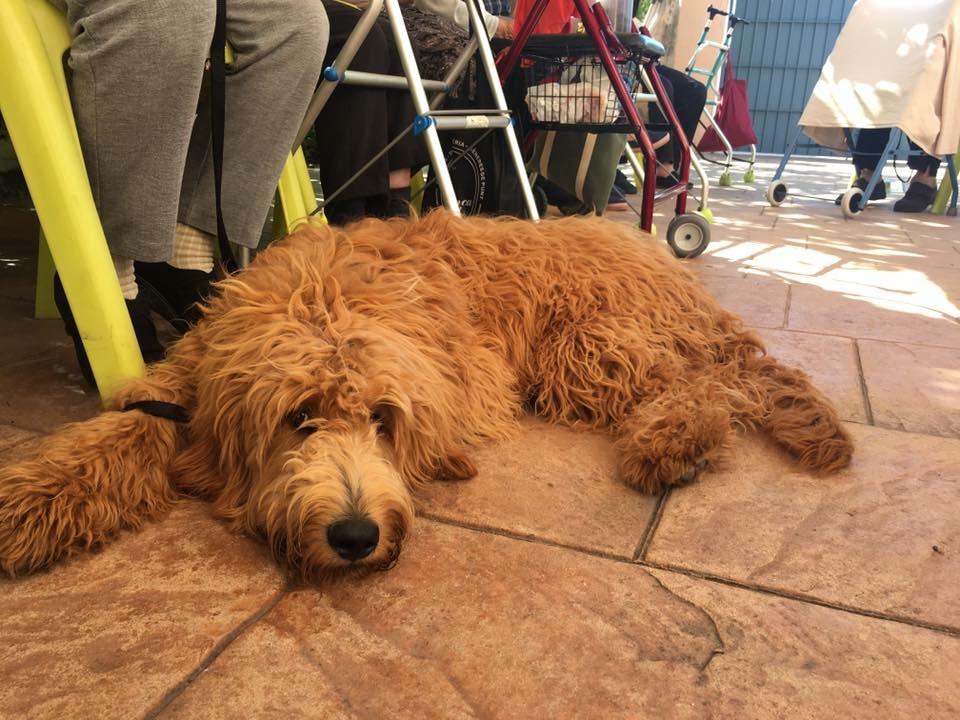 tiempo de espera perro de terapia