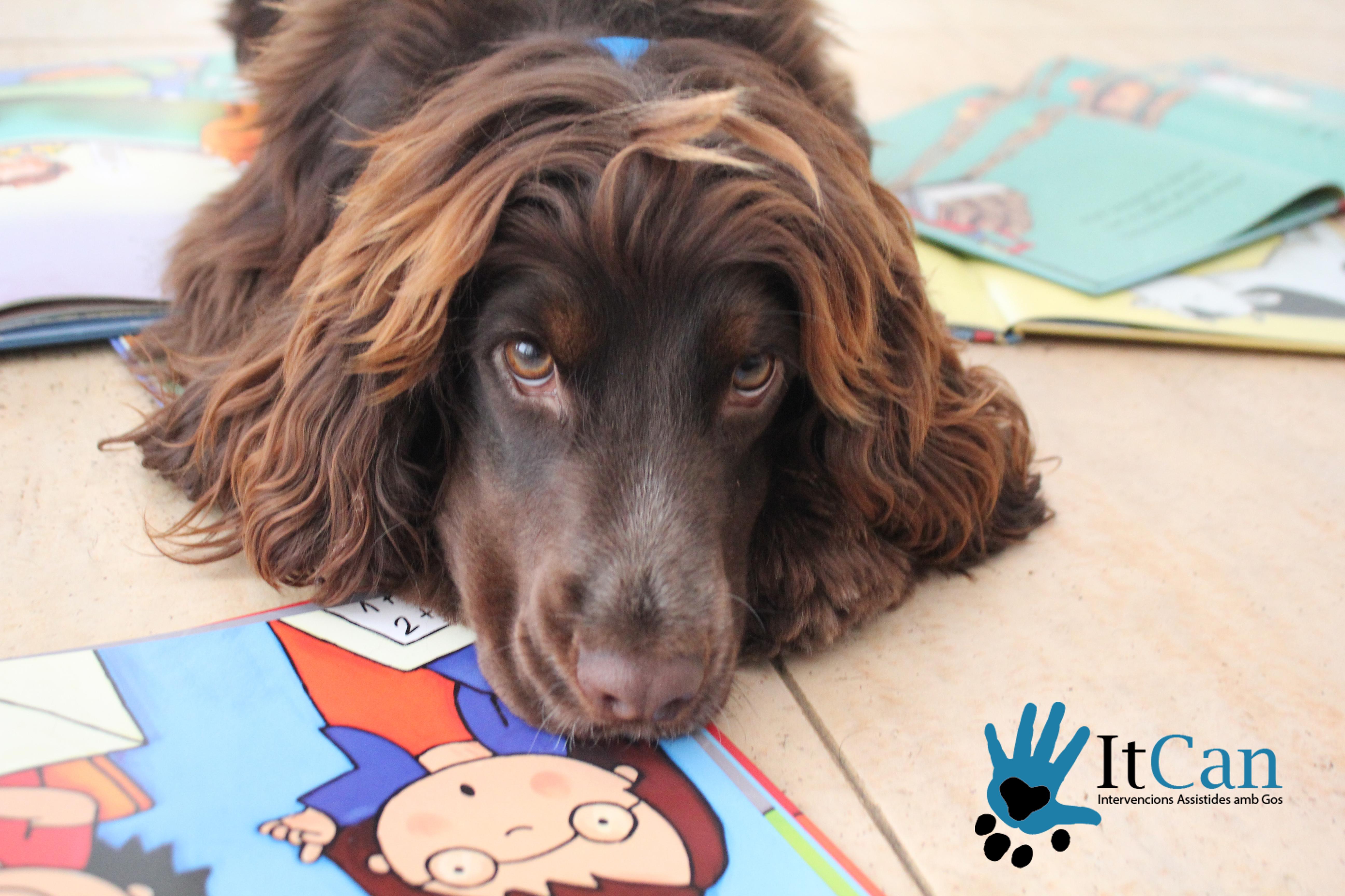lectura asistida con perro