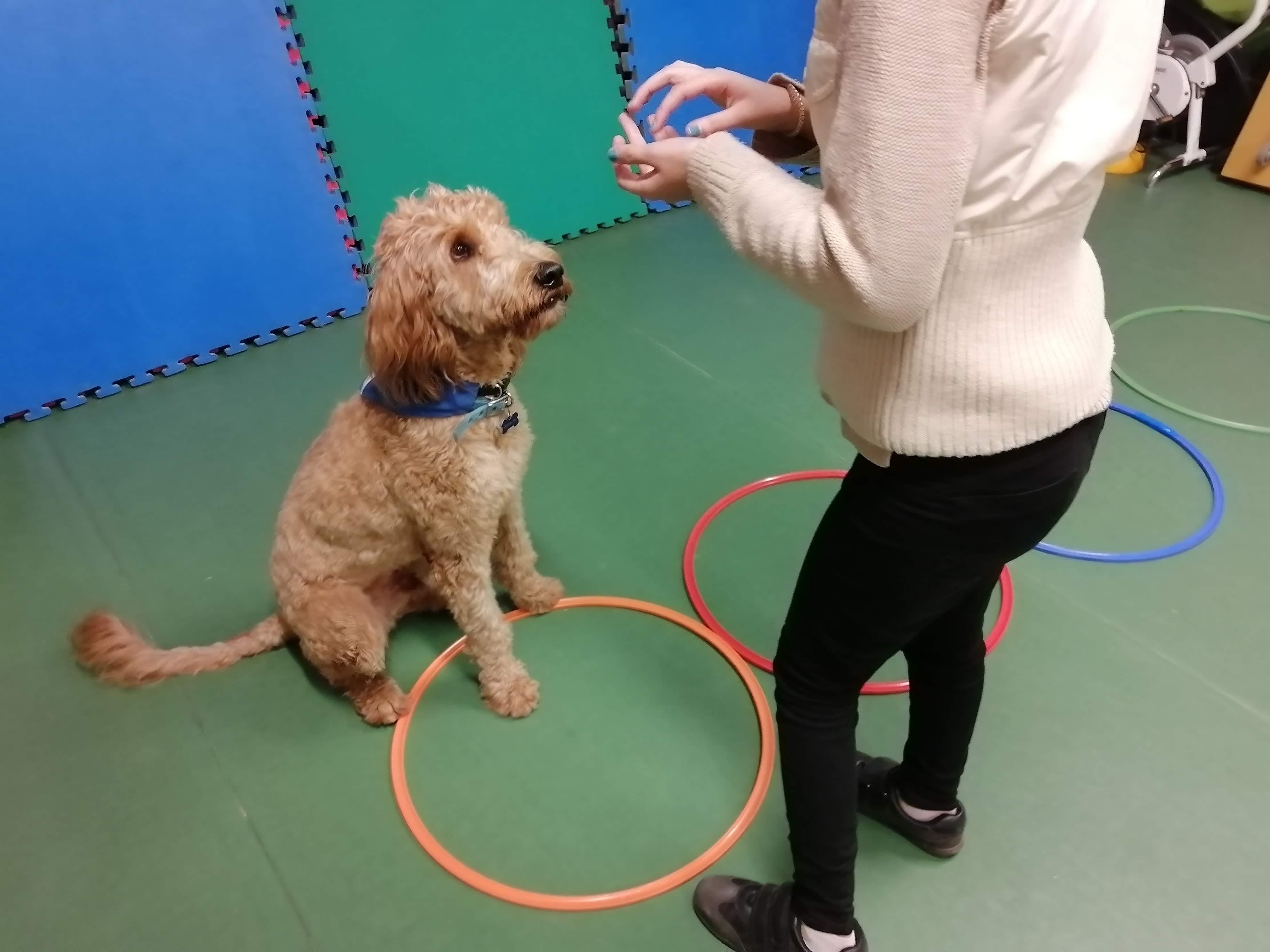 ejercicio terapia con perro