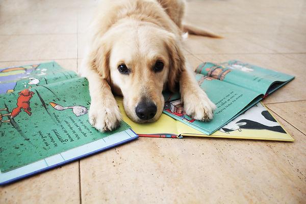 perro de terapia lectura