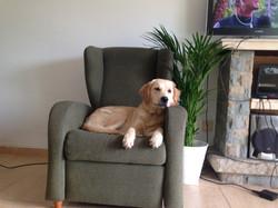 perro de terapia descansando