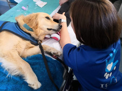 hospital can ruti perros