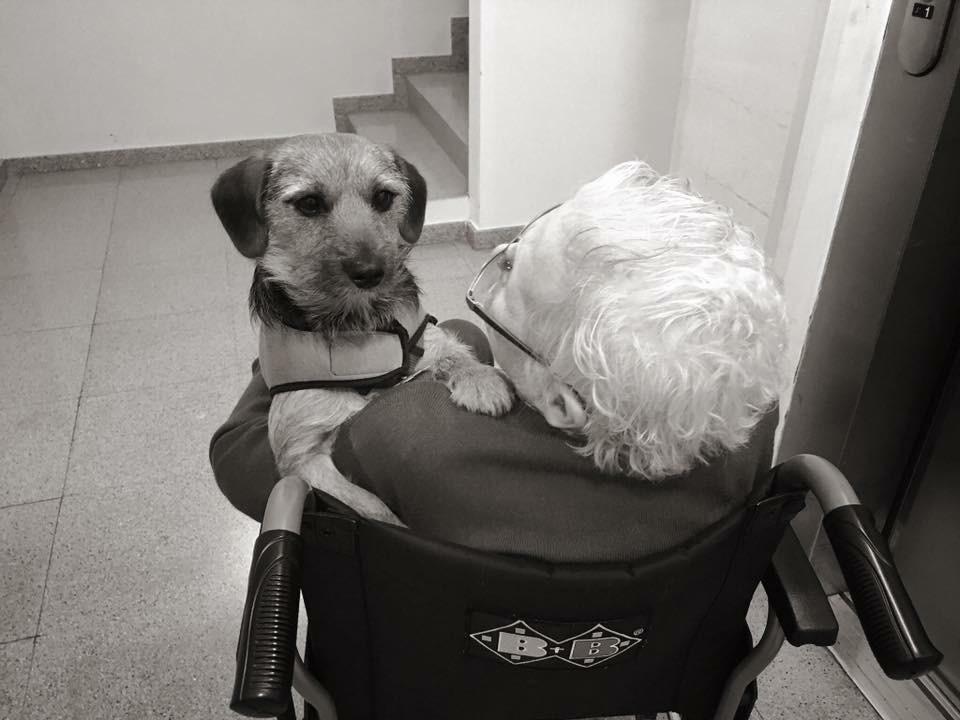 perro pequeño de terapia