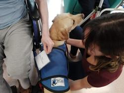 en sesión de terapia con perro