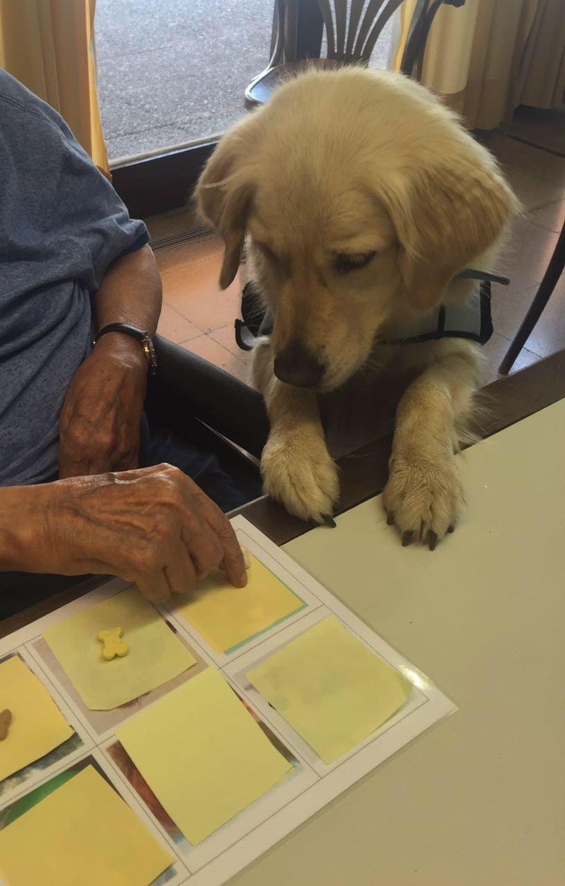 perro de terapia esperando premio