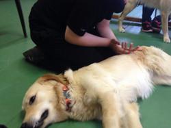 acariciando perro de terapia