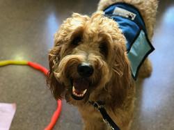 educación perro de terapia
