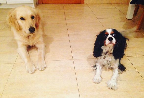 formación perro de terapia