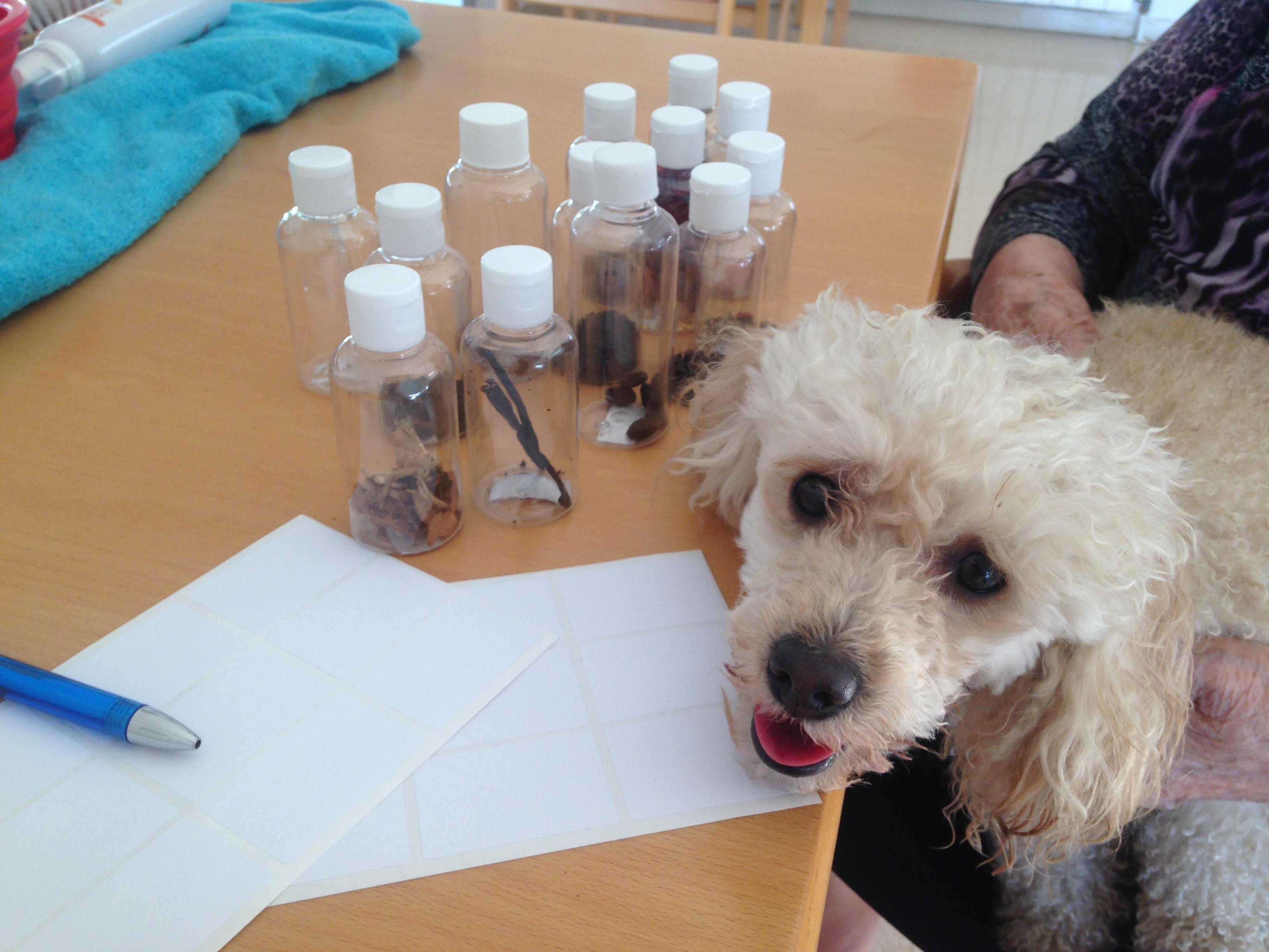 terapia con perro y olfato