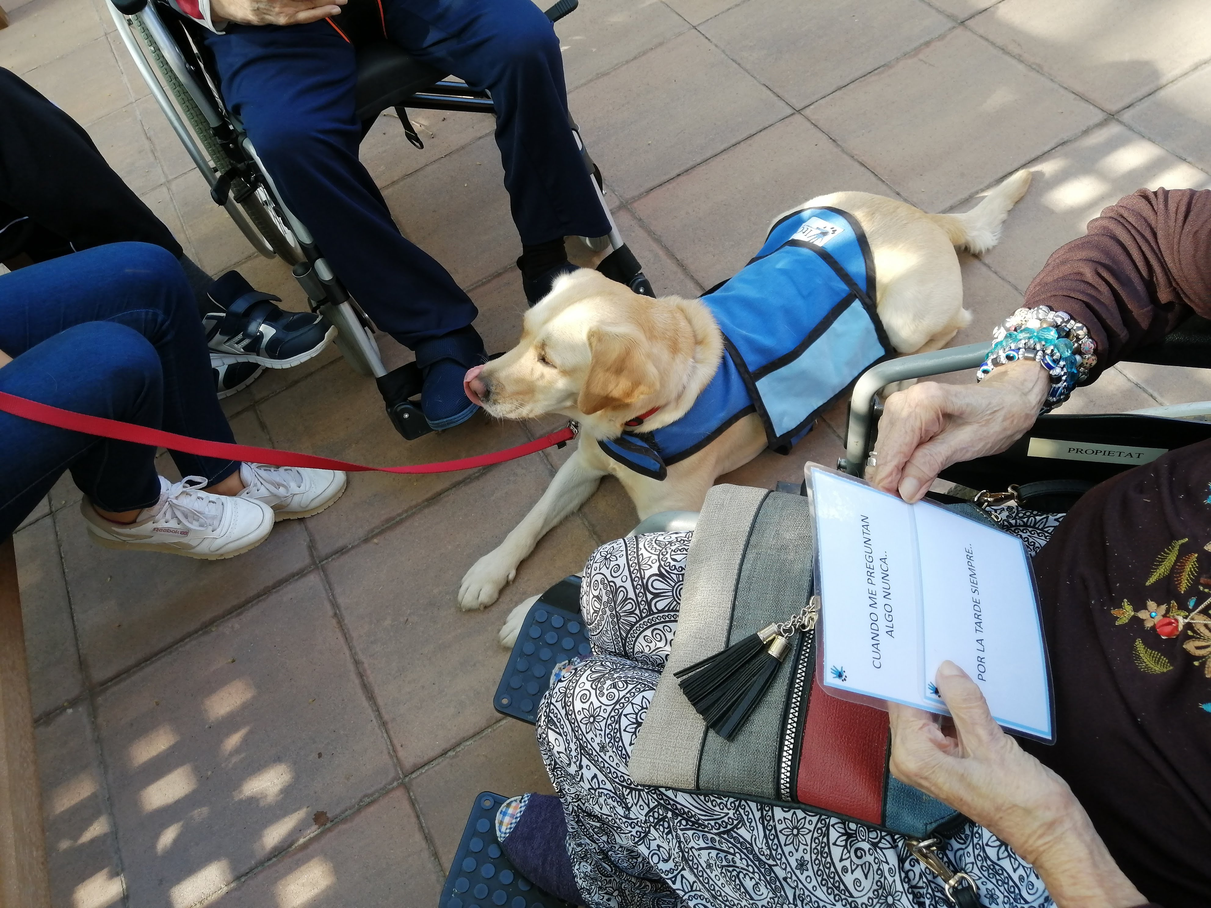 intervención asistida con perro barcelona