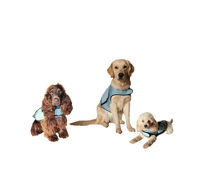 equipo perros itcan