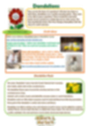 dandelion activity sheet jpeg.jpg