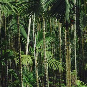 Institutional Strengthening of Forest Land-Use Plan in General Nakar, Quezon