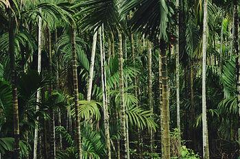 Árvores de floresta