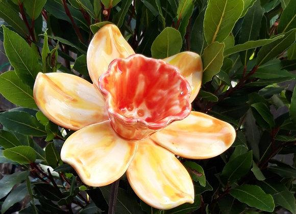 Small Yellow and Orange Daffodil