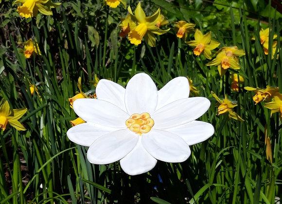 White Daisy Garden Flower