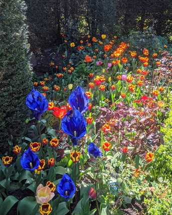 Blue Calla Lillies Creamic Flowers Garden Sculpture by Renee Kilburn Ceramics at Abbey House Gardens.