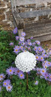 White Chrysanthemum by Renee Kilburn Ceramics at Newark Park National Trust in 2020. 85 cm tall.