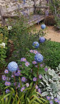 Agapanthus Globe Flowers. 85 cm tall.