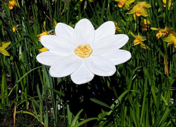 Small White Garden Flower