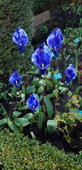 Blue Calla Lillies Ceramic Flowers Garden Sculptures by Renee Kilburn Ceramics