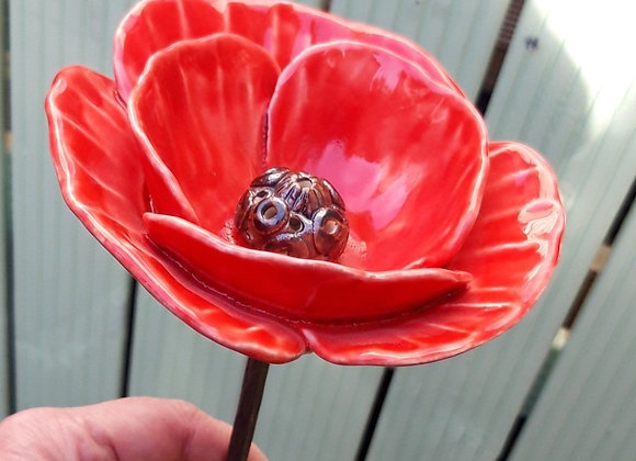 The Rosemoor Poppy