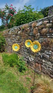Large Sunflowers at Berkeley Castle
