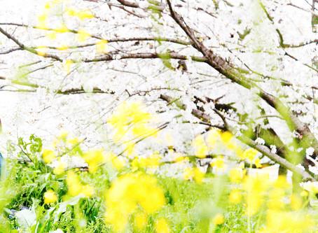 春期講習 2019.3.25 start!!