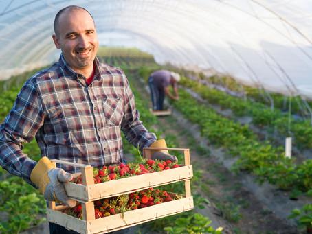 Waarom Buy Fresh beter is dan een platform of eigen webshop.