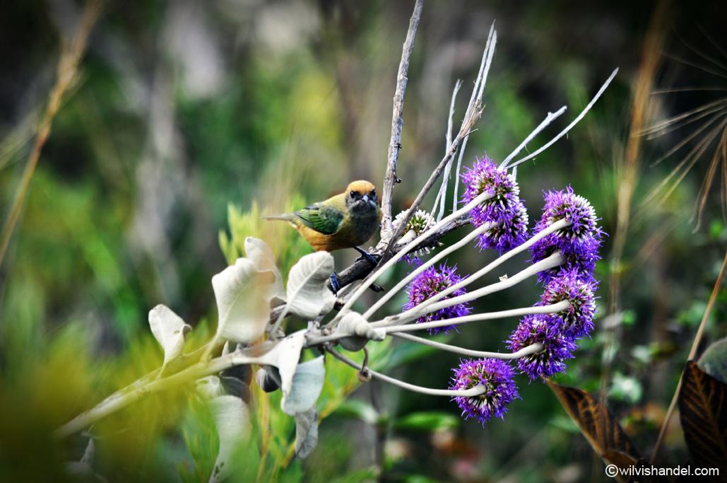 natureza fauna flora Wilvis Handel Fotografia (37)